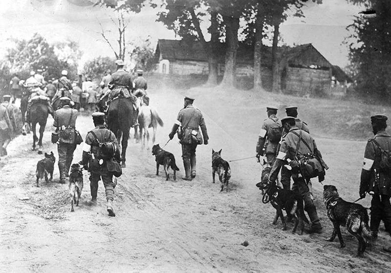 ww1-animals-27