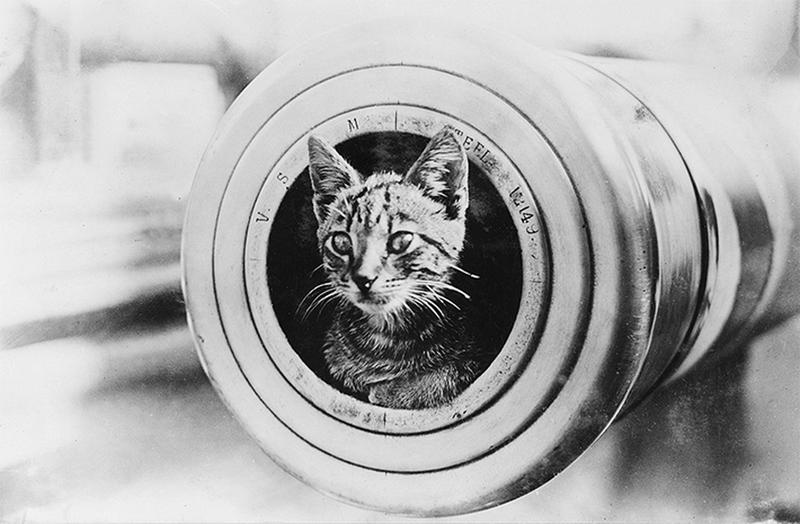 ww1-animals-21