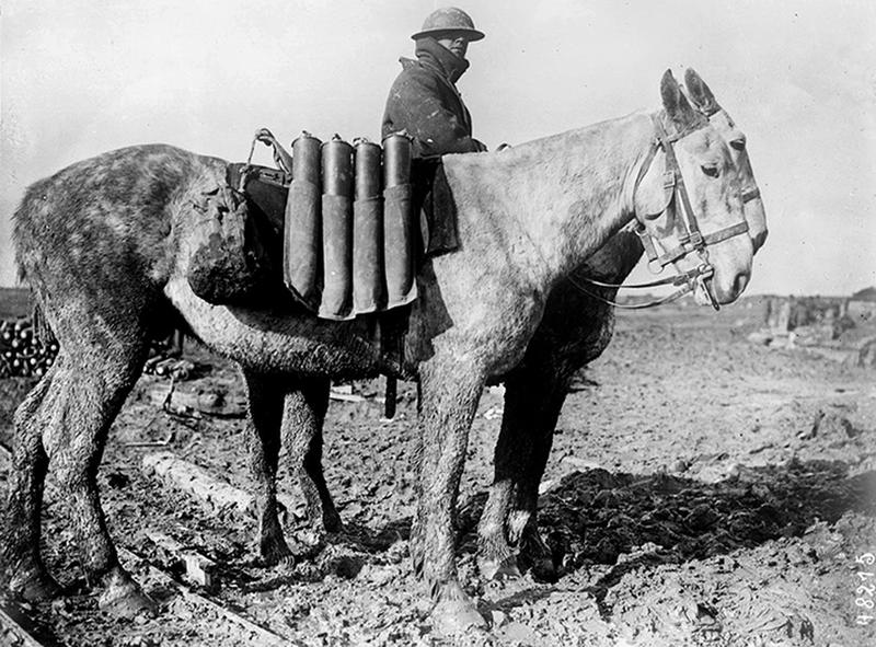 ww1-animals-31