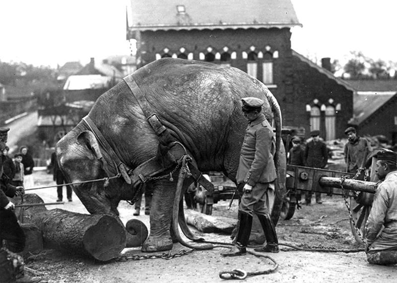 ww1-animals-14