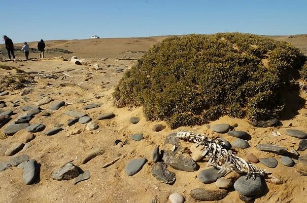 skeleton coast 7
