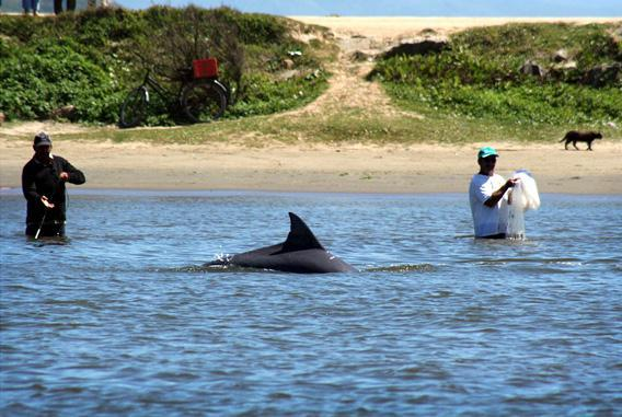 Humans and Dolphins: Fishing Buddies | History Daily