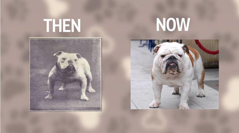 6 Popular Dog Breeds Before And After 100 Years Of Breeding History Daily