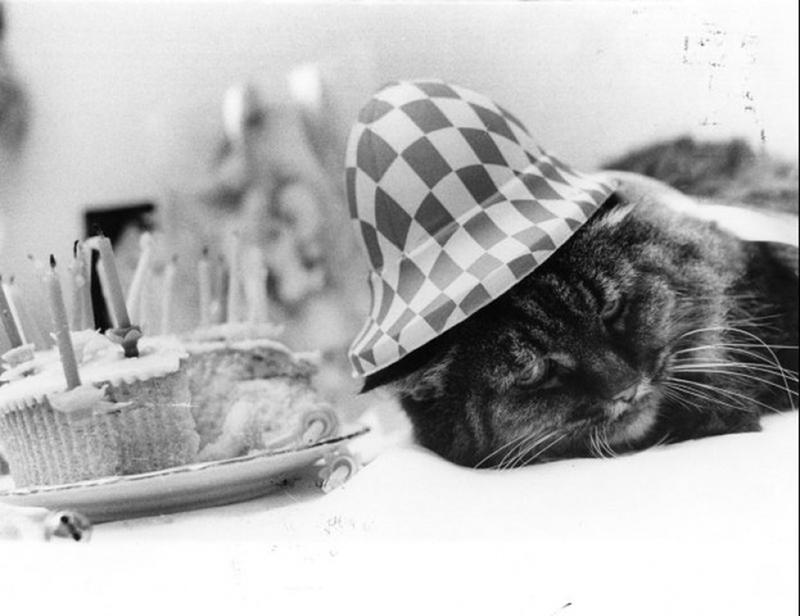 Vintage-Pics-Animals-17