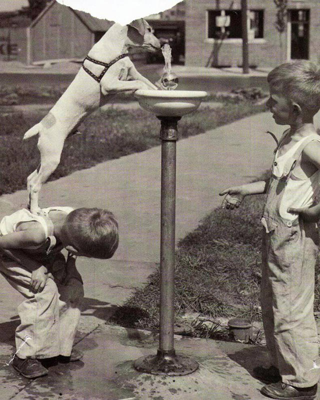 Kids-and-pets-1