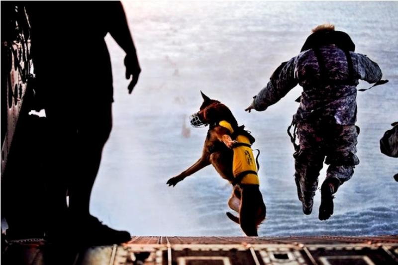 perfectly timed military photos 11