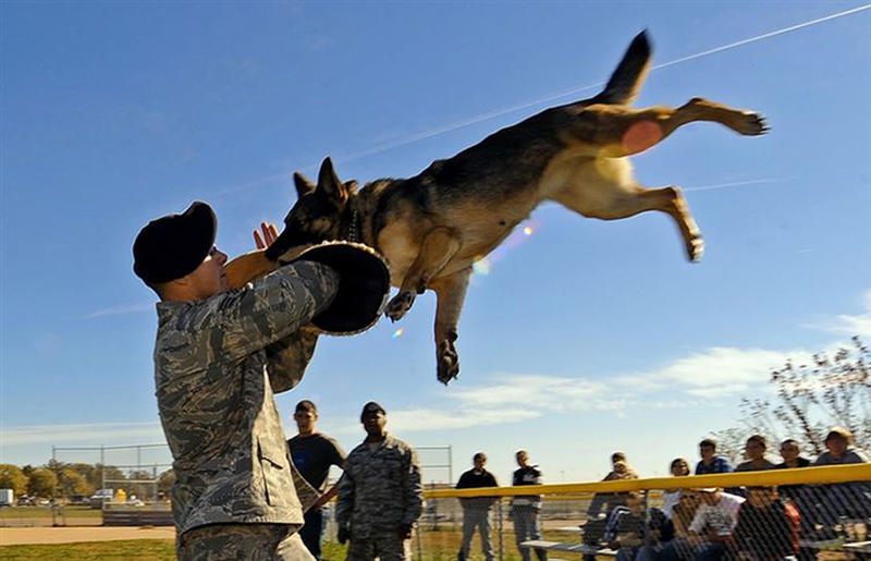 perfectly timed military photos 10