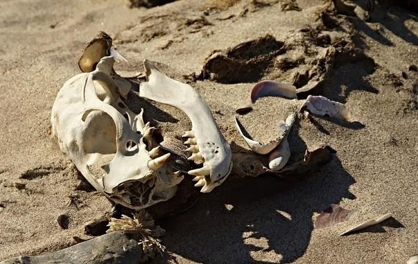 skeleton coast 6