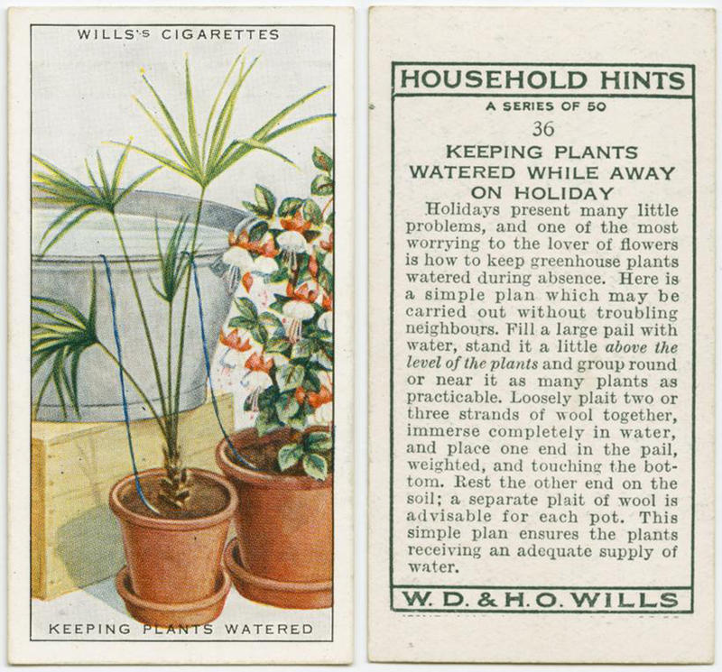100 yr old lifehacks - plants